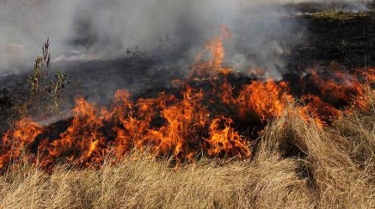 2000 дка треви горят в Хасковско, 1500 дка гора пламна във Варненско