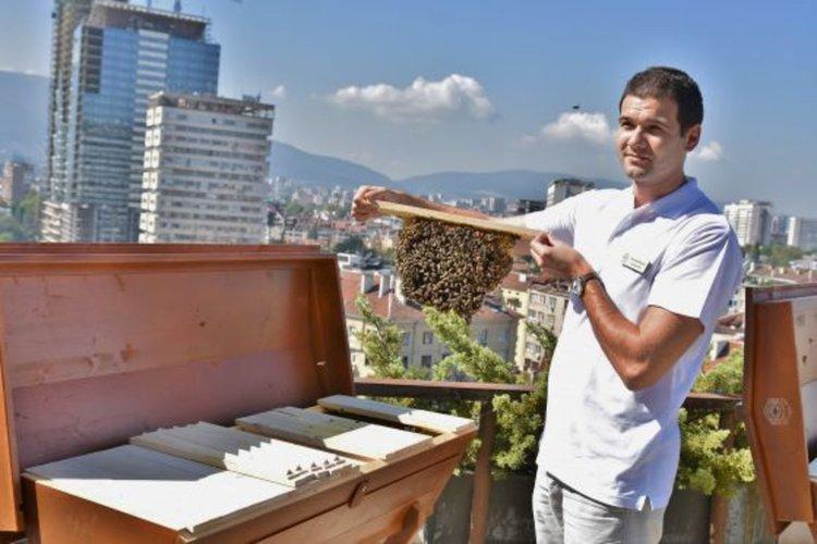 Помощта за пчелари ще е до 11 лева на кошер