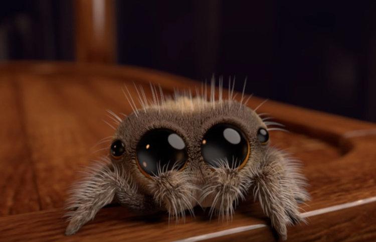 Най-сладкият паяк в мрежата (видео)