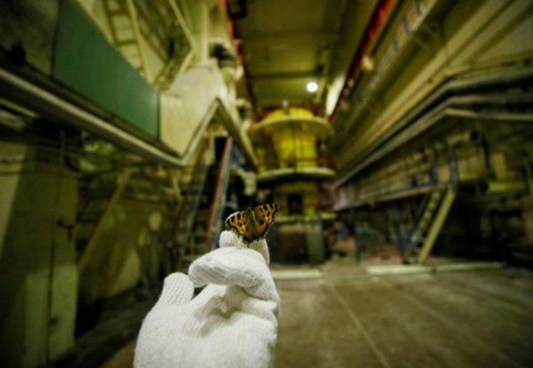 Работник държи в ръката си пеперуда в третия реактор. Снимка: Reuters