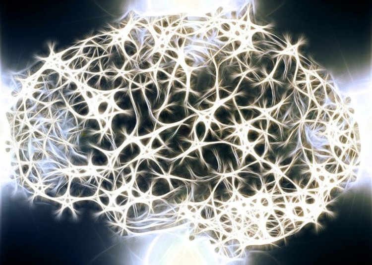 Учени трансплантираха спомени