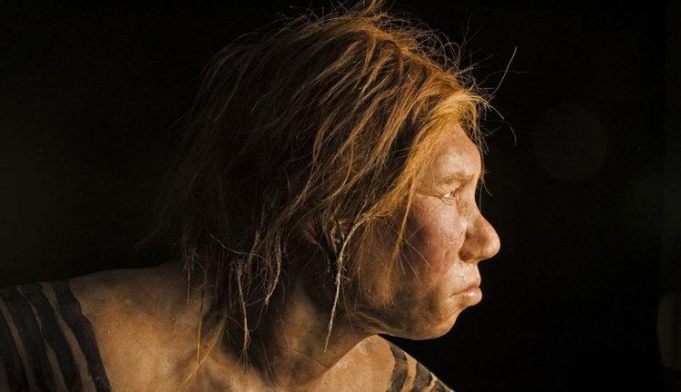 Учените планират да отгледат мозък на неандерталец