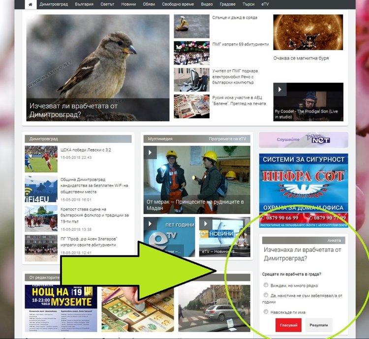 Изчезват ли врабчетата от Димитровград? -АНКЕТА