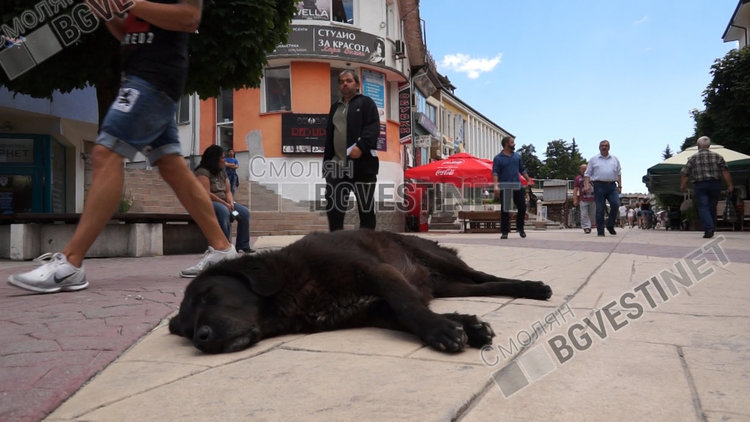 Административният съд отмени наредбата за стопанисване на кучета на Община Смолян