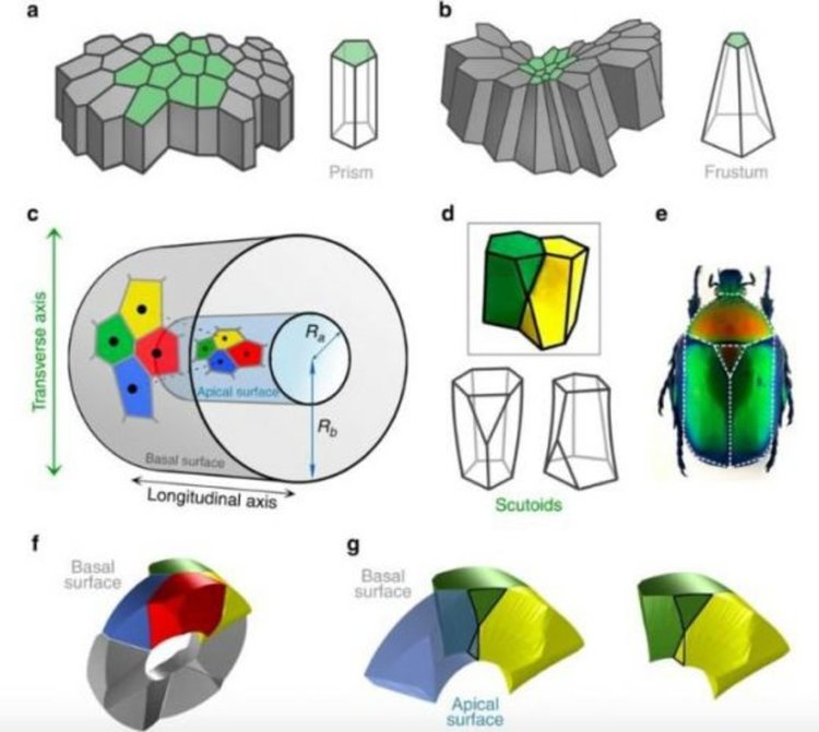 Pedro Gómez-Gálvez et al., Nature Communications