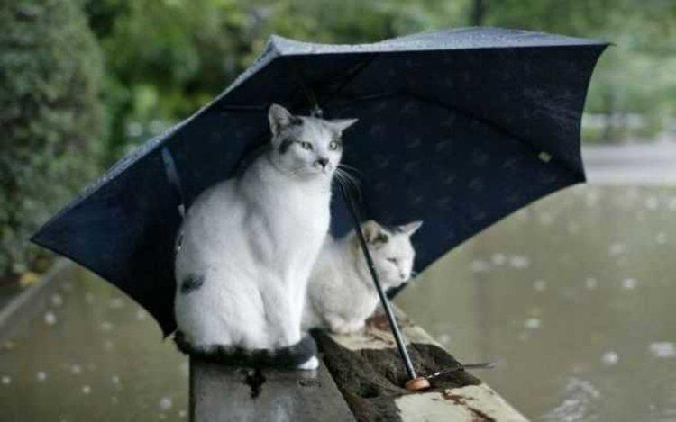 Днес чадърът няма да е излишен