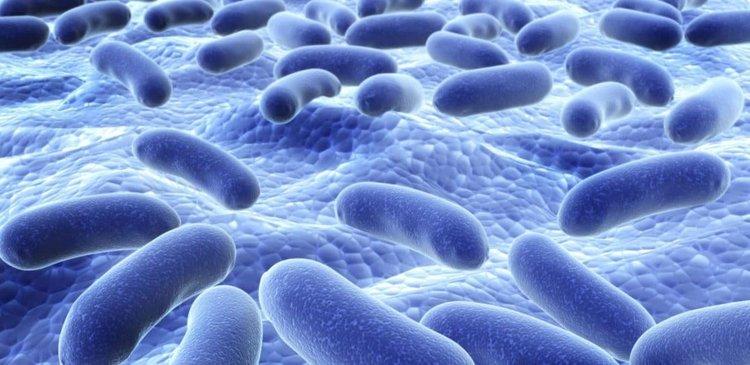 Лоши новини за пробиотиците