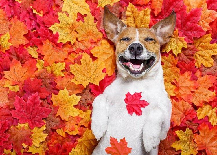 Есента ни подарява слънчев уикенд