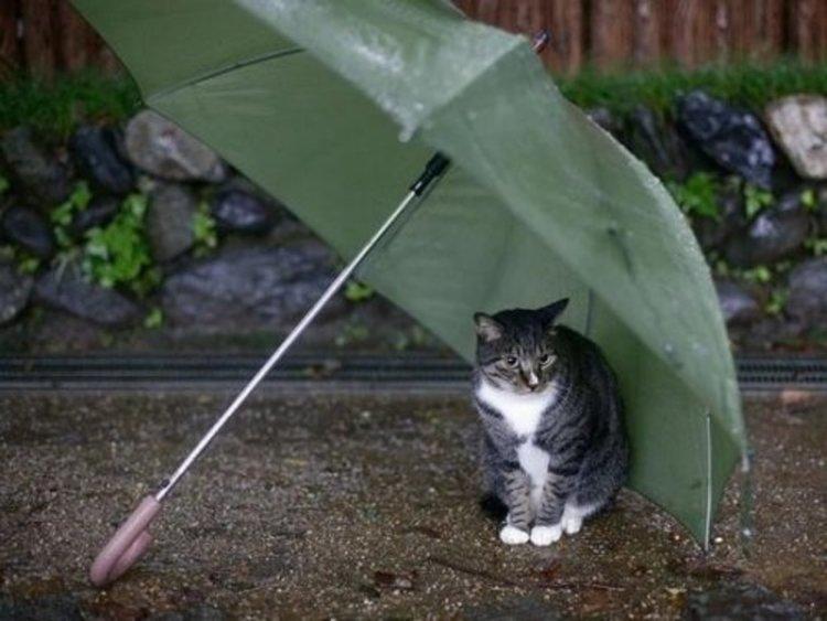 Облачен и ветровит четвъртък, носете чадър
