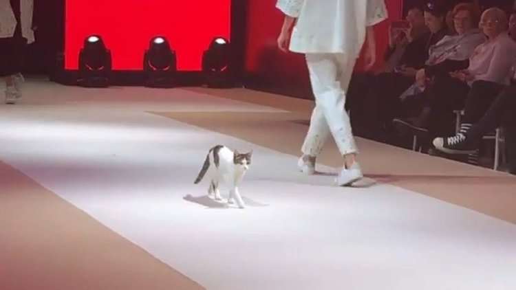 Котка завладя подиума на модно шоу (видео)