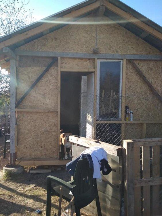 Млaдоженци събраха средства за бездомни кучета в Хасково от парите за букети