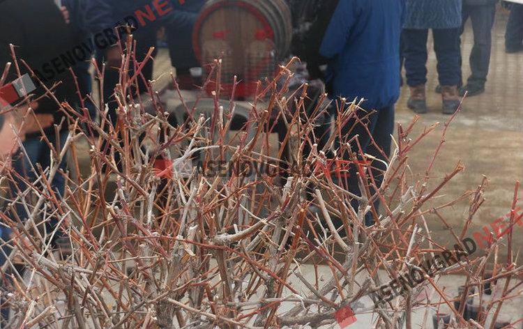 Търси се най-доброто вино от реколта `2018, обявяват победителите на централния площад