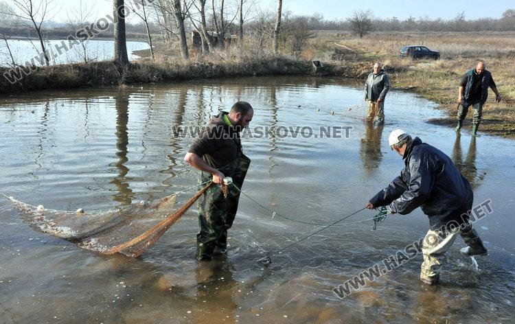 Хасковски шаран слагат на трапезата в Първомай, от язовира до масата рибокът скача с 2 лева за кило