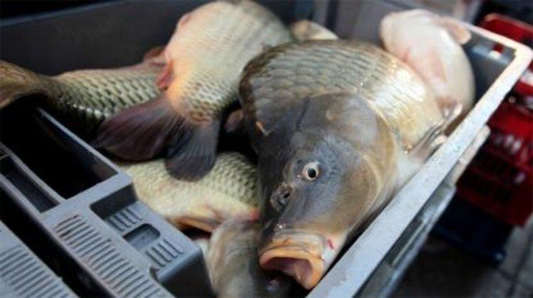 Никулденският шаран удари цена от 7,50 лева в Кърджали