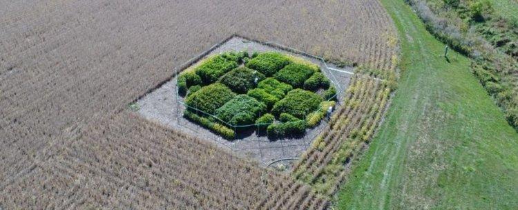 Учени отстраниха дефект във фотосинтезата, ускорявайки растежа на растенията с  40%