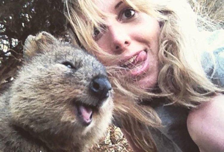 Щастливо животно: Феноменът куока (видео)