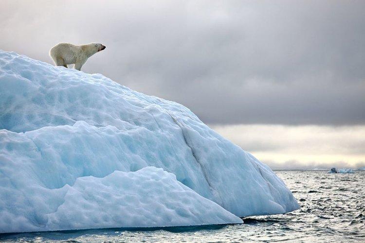 """""""Опустошително"""" затопляне заплашва норвежките арктически острови"""
