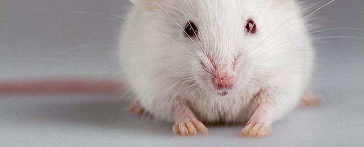 2 протеина регенерират ампутирани крайници
