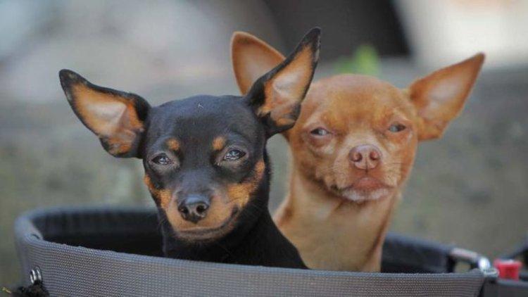 До края на март е срокът за пререгистрация на домашно куче
