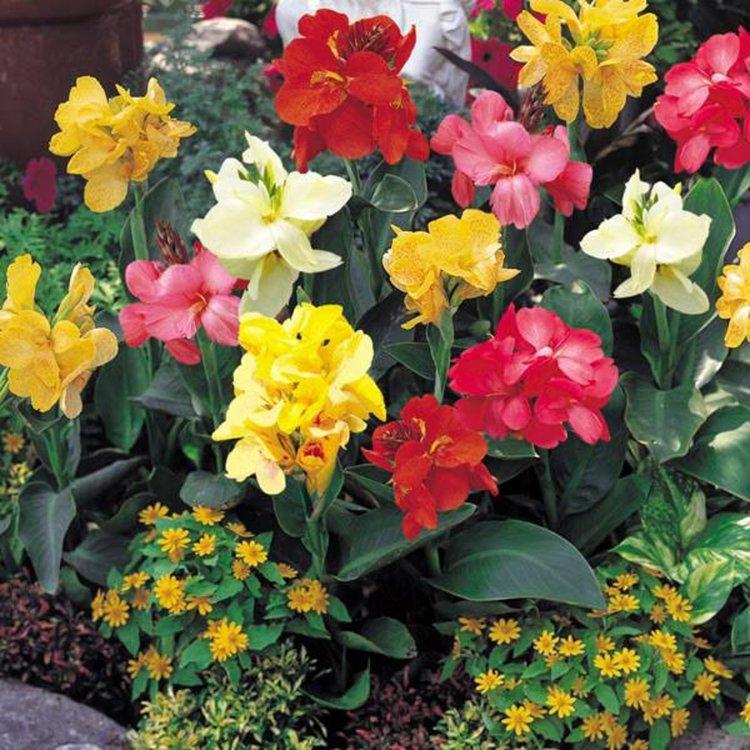 "800 ярки цветя от Унгария ще ""грейнат"" в Смолян, дар са от побратимения Кишпещ"