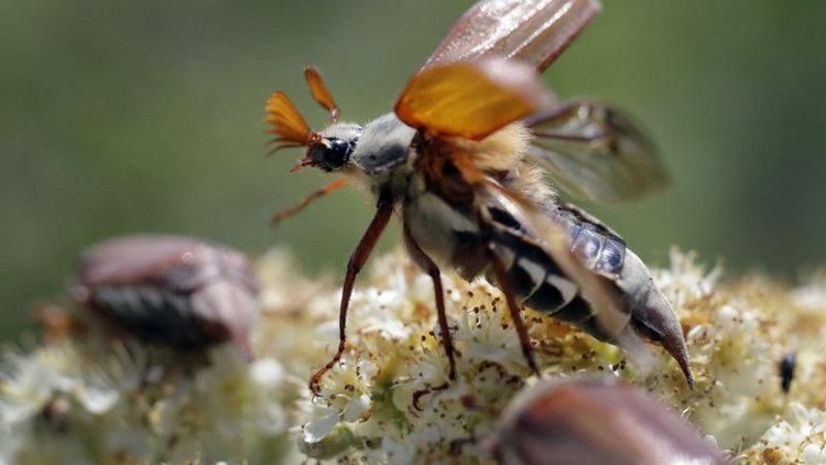 Насекомите на планетата изчезват опасно бързо, твърдят учени