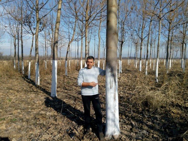 С фиданки пауловния, произведени в Първомайско, всяка година се засаждат 750 дка гора