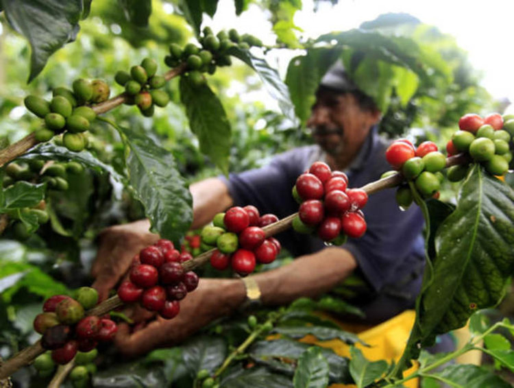 Любопитни факти за кафето, които може да сте пропуснали