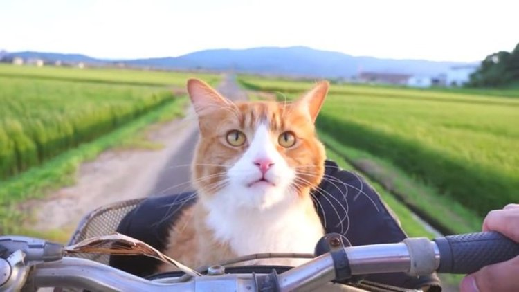 Добре възпитаните котки поздравяват (видео)