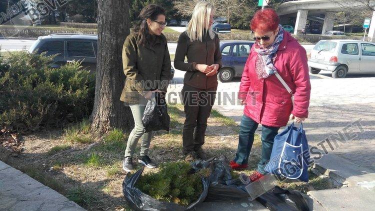 Аронията-хит на акцията в Смолян за безплатни фиданки от Горското предприятие