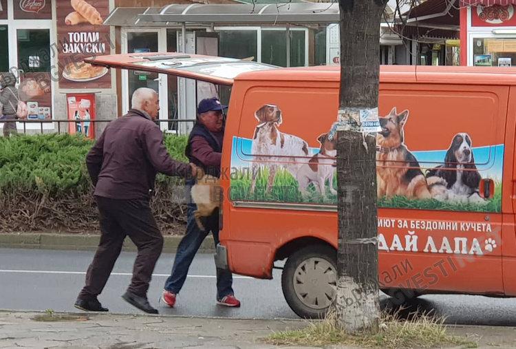 Граждани реагират гневно за нехуманно отношение към бездомните кучета в Кърджали