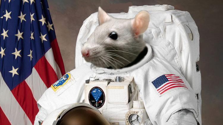 Мишки в космоса (видео)