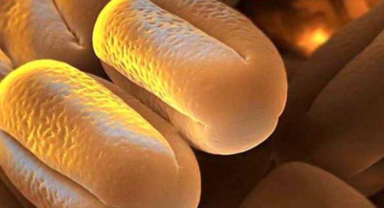 Детелина, размер на зърната 10-12 микрона