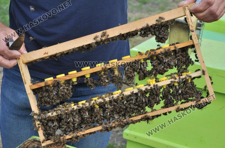 Стопани от Спахиево притеснени за пчелините заради фантомно пръскане от въздуха /видео/
