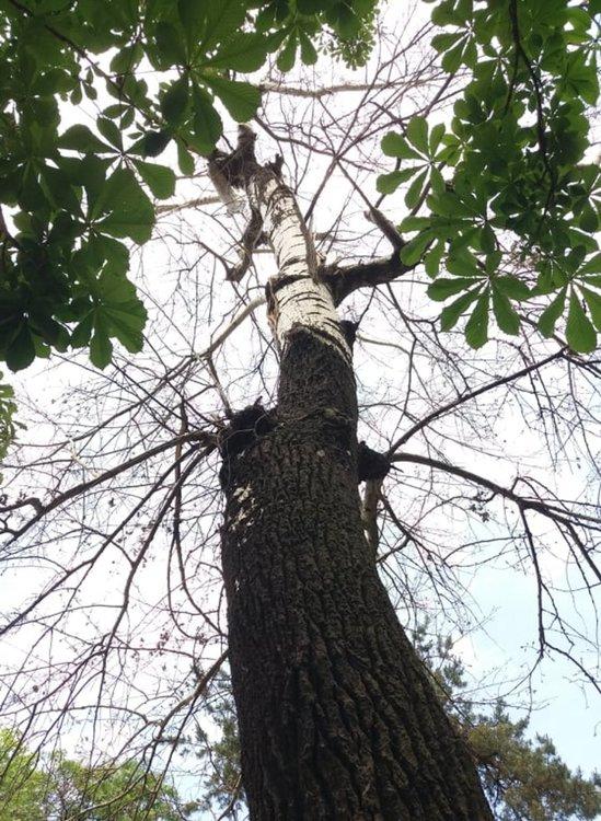 За опасно дърво в парка е сигнализирала д-р Сименова