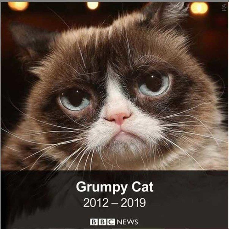 Почина най-популярната котка в интернет
