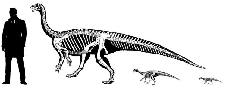 Бебе динозавър щъкало на 4 крака, на годинка прохождало на два