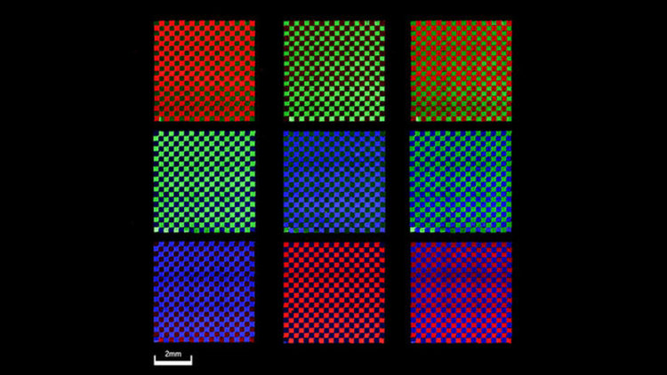 Когато се комбинира с поляризиращи филтри, 3D отпечатните нановлакна от перовскит създават регулируеми многоцветни дисплеи. N. Zhou et al., Sci. Adv. 5, EAAV8141 (2019)