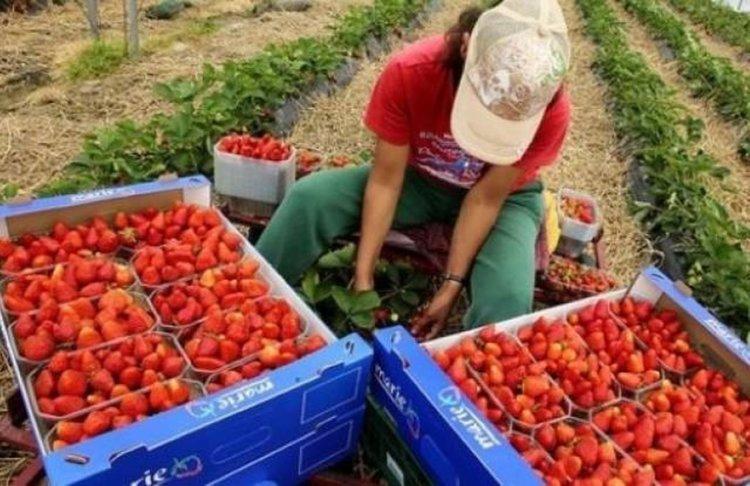 Международната организация на труда настоява децата да не работят на полето , а за мечтите си