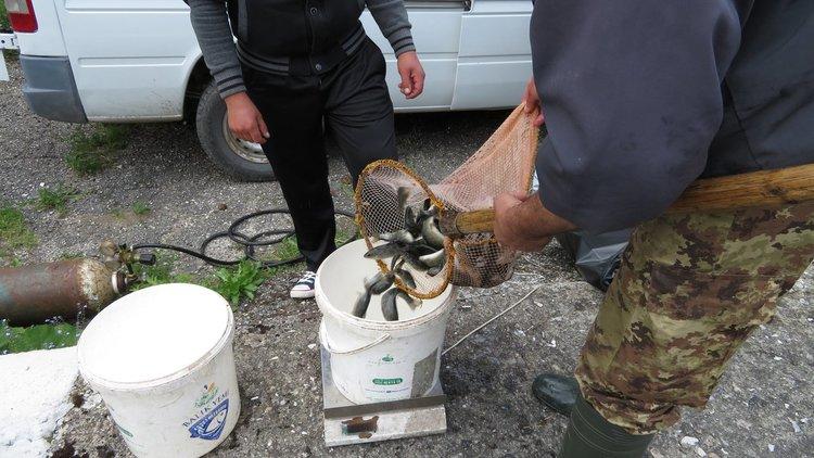 С дарения риболовци зарибиха три реки в девинско