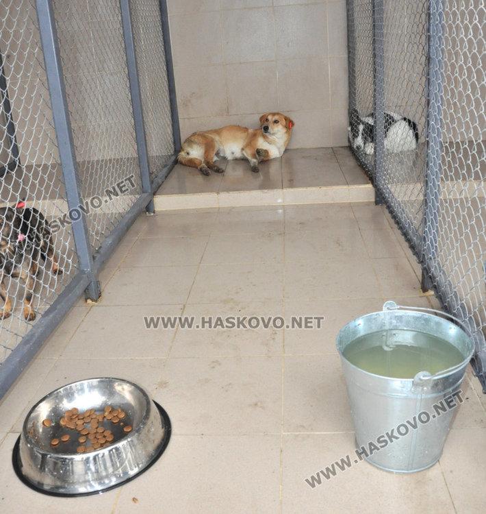 6 кучета с нови стопани след приюта в Хасково