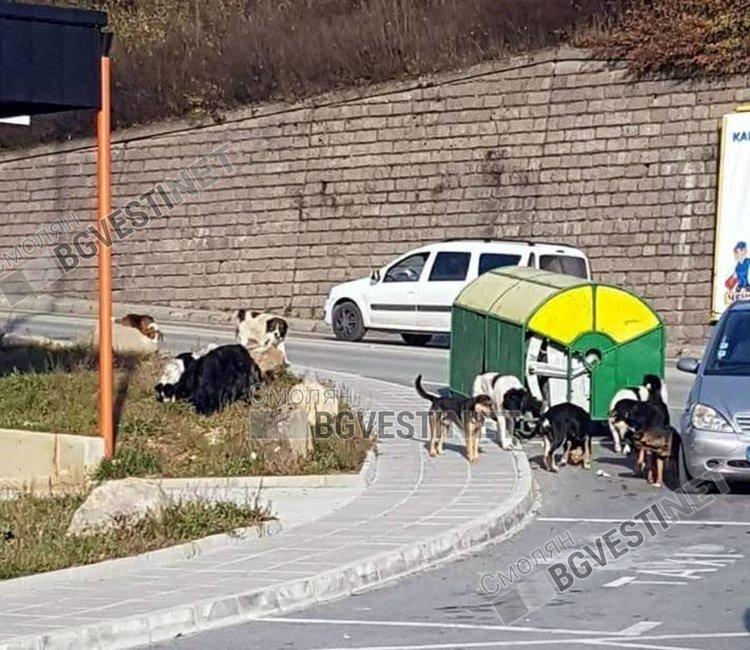 Община Смолян пита гражданите как да се реши проблема с бездомните кучета!
