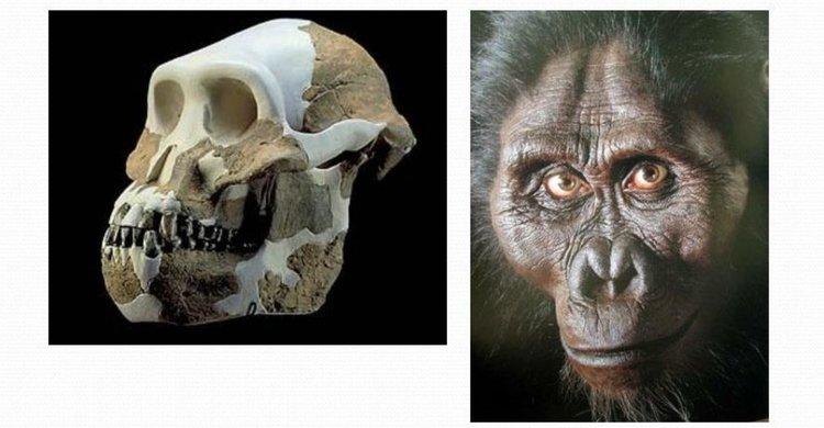 Най-древните фосили на австралопитек доказват, че е имал човешка стойка