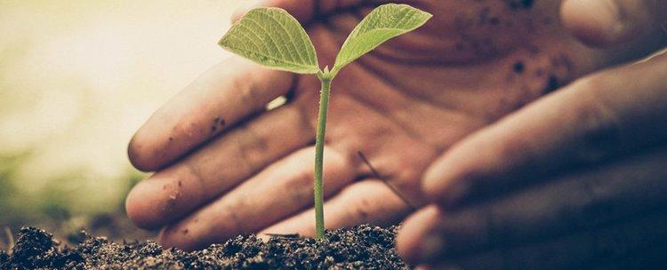 Засаждането на дървета ще пребори климатичните промени...ако започнем днес