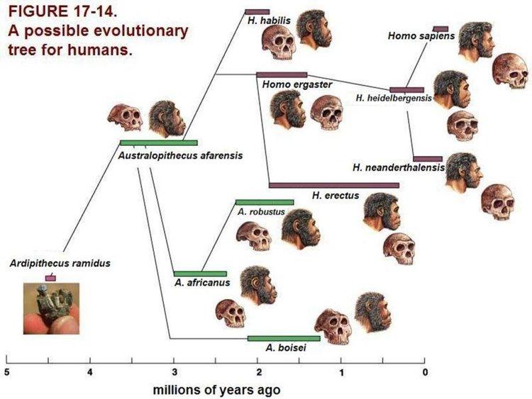 Говорът се е появил преди 1,8 млн. години?