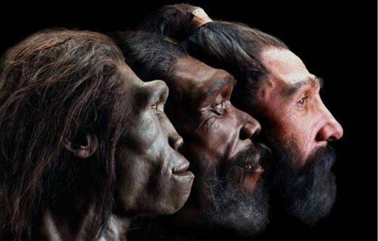"Как хората станаха ""голи маймуни"""