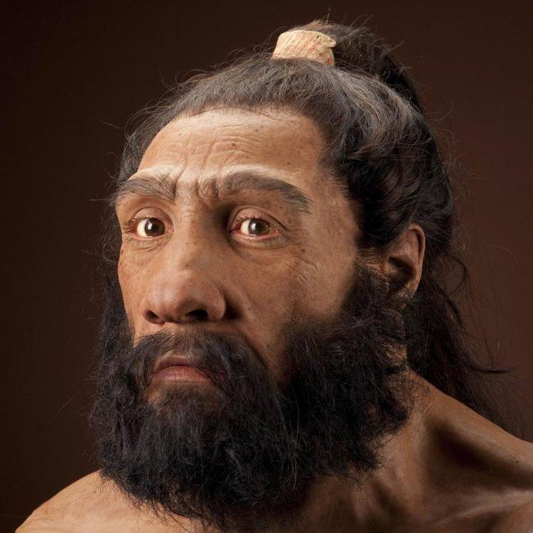 Homo neanderthalensis, по-ранните роднини на Homo sapiens, също е еволюирал, освобождавайки се от козината на по-голямата част от тялото си. (Реконструкция въз основа на Shanidar 1 от John Gurche/National Museum of Natural History)