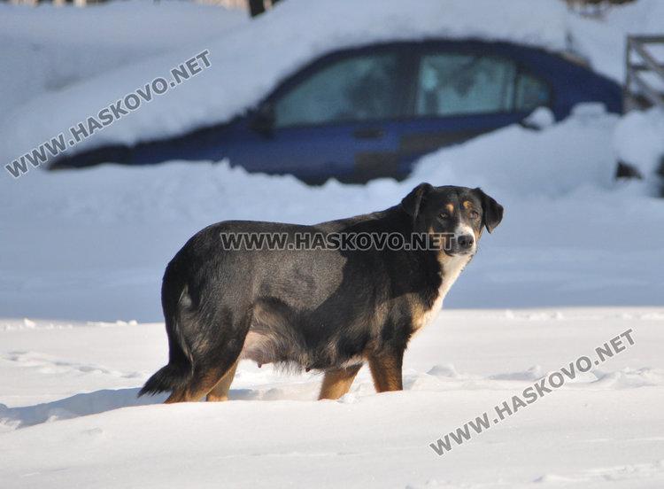 Държавата отпусна 2.3 млн. лв. за Смолян, около четвърт милион ще са за временен приют за бездомни кучета