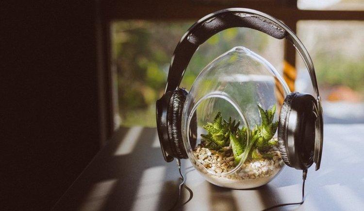 Растенията имат слух и се влияят от чутото