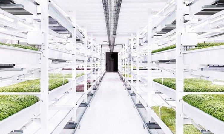 Хранителна революция: Градско земеделие по покриви и в тунели