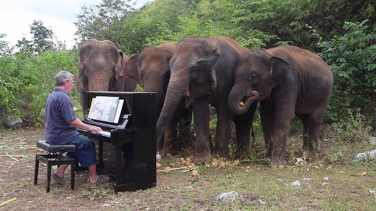 Пианист свири Бетовен на слоновете (видео)